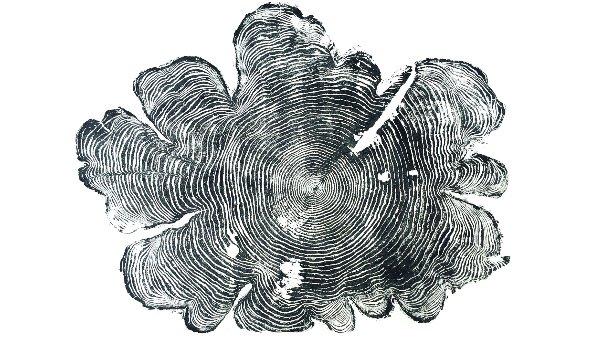 Cederträ, för- och nackdelar
